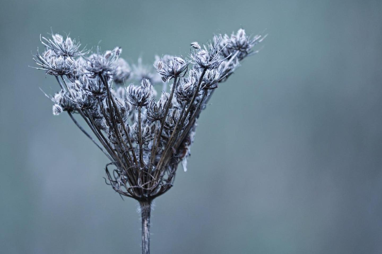 winter-3898314_1280