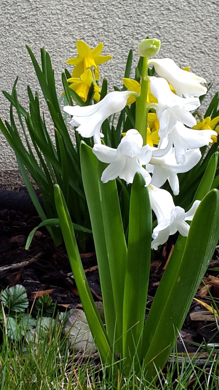 Blume aus Garten